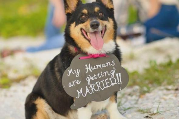 engagement-announcement-ideas-doggie