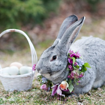 Happy Easter 2015!!! (Tampa Wedding Planner)